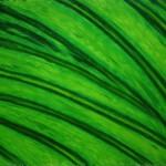 Veiny-Leaf.jpg
