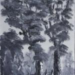 Eucalyptus Trees on the Roadside