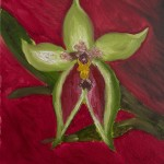 Green Orchid with Red Heart Center